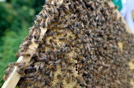 Les députés votent l'interdiction des néonicotinoïdes à partir de septembre 2018 | Biodiversité | Scoop.it