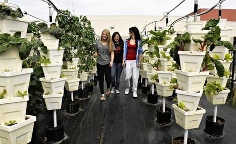 Students grow veggies | Wellington Aquaponics | Scoop.it