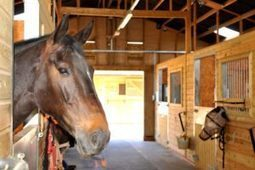 Boarding Horses on Your Hobby Farm | Catanese & Wells | Equine Law | Scoop.it