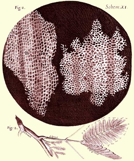 Science: for the sheer fun of it! - AoB Blog | GarryRogers Biosphere News | Scoop.it