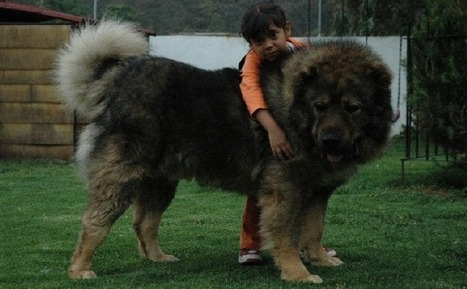 Very Rare Dog Breeds 12 Rare Dog Breeds You Need to
