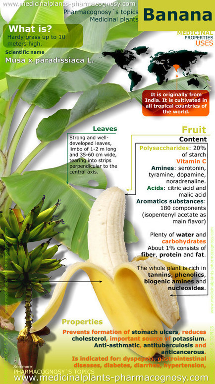 banana properties infographic - Pharmacognosy - Medicinal Plants   Pharmacognosy   Scoop.it
