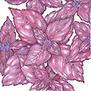 Basil: Dark Purple Opal   Simply Grow Great Food   Scoop.it