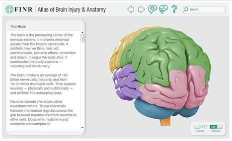 Un mapa interactivo en 3D del cerebro humano | InEdu | Scoop.it