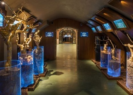 Les Caves du Louvre - l'eveil des sens | Le Vin et + encore | Scoop.it