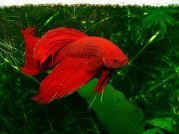 ¿Cómo empezar un acuario biotipo? : TiendAnimal | Acuarios | Scoop.it