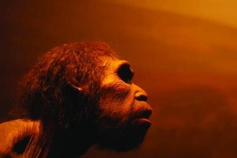 Los neandertales podrían haber vivido en el sur de Escandinavia | Arqueología, Historia Antigua y Medieval - Archeology, Ancient and Medieval History byTerrae Antiqvae (Grupos) | Scoop.it