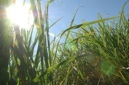 Brazil sees increase in ethanol production, sales in late July | World Bio Markets Brazil Report | Scoop.it