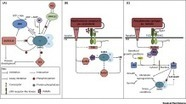 The SnRK1 Energy Sensor in Plant Biotic Interactions: Trends in Plant Science | Plant-Microbe Interaction | Scoop.it