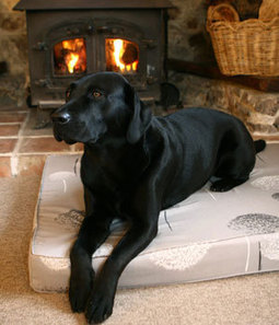 Choosing To Buy A Memory Foam Dog Bed | The Dog Blogger | Scoop.it
