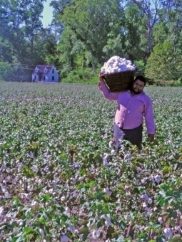 That Cotton Thing…and Food…. | Our Black History | Scoop.it
