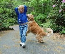How To Teach Kids To Approach Dogs | Dog Lovers | Scoop.it