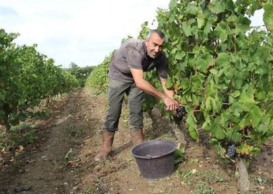 En cinq ans, les conversions bio ont triplé dans la viticulture | Société durable | Scoop.it