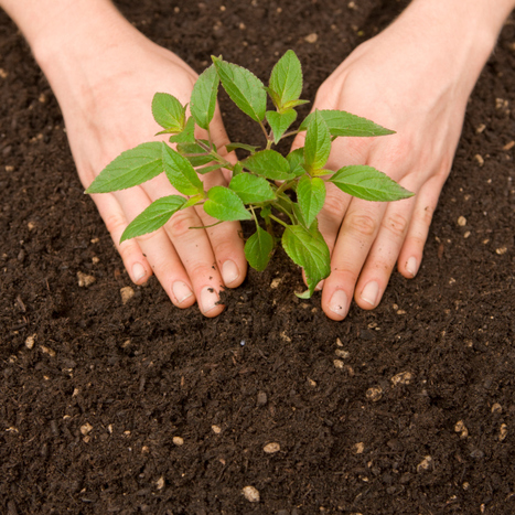 Thinking of Planting Some Trees in Your Yard?   Professional Lawn & Tree Service   Scoop.it