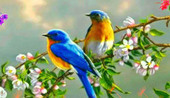 Top 10 Most Fascinating Bird Species In The World   Top10Share   Scoop.it