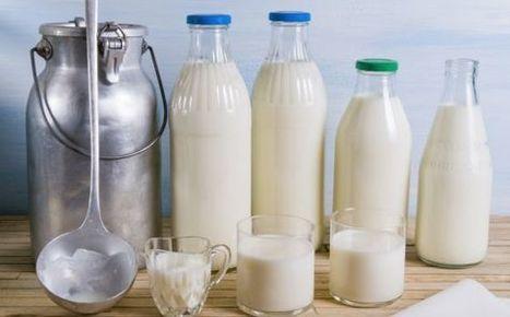 Cómo responder al típico que dice que la leche es mala | Dietitians as a key professional to improve health | Scoop.it