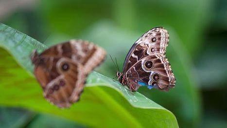 Les insectes entendent le battement d'ailes des oiseaux | Les sons de la nature | Scoop.it