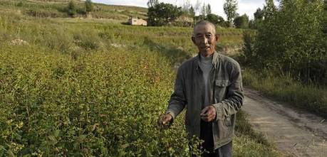 Sustainable agriculture in China: then and now | sustainablity | Scoop.it