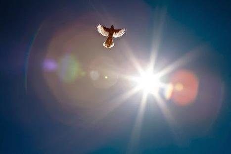Talks By Sri Sri Ravi Shankar: You are a Free Bird - A talk by Sri Sri Ravi Shankar   Clever yoga   Scoop.it