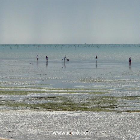 Coefficient 113 – Grandes marées été 2014 | iodé | Scoop.it
