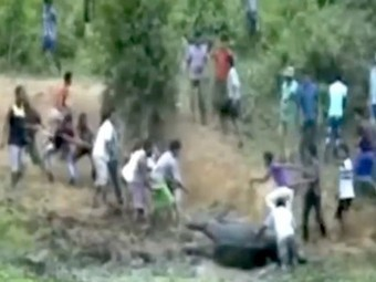 Indian villagers rush to the rescue of a baby elephant (Video) | animals and prosocial capacities | Scoop.it