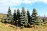 Citibank's Top Lobbyist Turns Christmas-Tree Seller for Holidays   Christmas Trees and More   Scoop.it