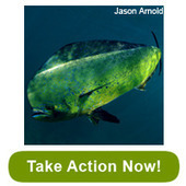 Help Stop a USA Bad Fisheries Bill in Disguise - TAKE ACTION NOW | OUR OCEANS NEED US | Scoop.it