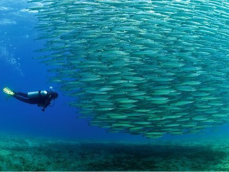 Red Sea Extension Cairo & Sharm El Sheikh | egypttravelcc | Scoop.it
