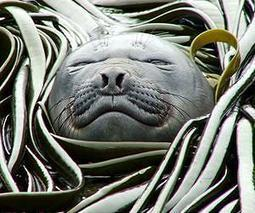 Climate change is causing modifications to marine life behavior | Sustain Our Earth | Scoop.it