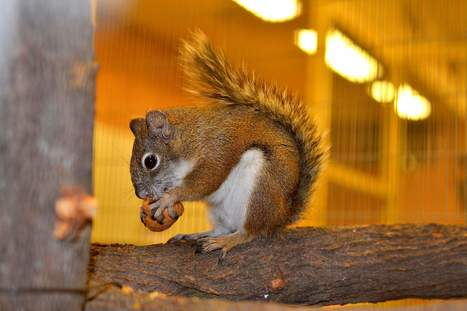 Endangered squirrels get help from humans | Durango (CO) Herald | CALS in the News | Scoop.it