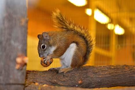 Endangered squirrels get help from humans | Durango (CO) Herald | CALS in the News | Scoop.it