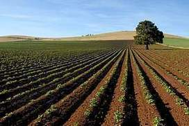 Coalition's soil carbon plan 'unviable', study finds | Geographical Issues | Scoop.it