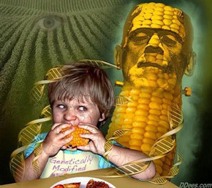 The gene of genetically modified foods can be transferred into human blood/DNA researchers say   Plant Based Transitions   Scoop.it