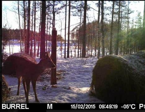 Metsän elämää tutkimassa riistakameran avulla – Openmetsä | Tablet opetuksessa | Scoop.it