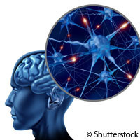 Study shows how brain rhythms impact learning | Cognitive science and society | Scoop.it