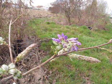 Apprenez à jardiner bon et bio, à Arques - La Voix du Nord | L'Indi Gène | Scoop.it