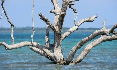 Sea levels could rise by two metres if the planet warms by 5°C   NERC media coverage   Scoop.it