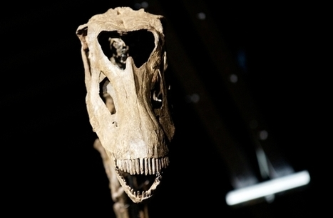 DNA profile of ancient skeleton rewrites history - Vancouver Sun | AncientHistory@CHHS 2012-13 | Scoop.it