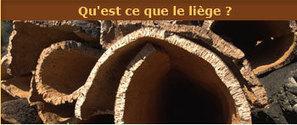 Les atouts du liège | lasnavas | Scoop.it