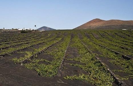 Lanzarote 56-70-97 | Le meilleur des blogs sur le vin - Un community manager visite le monde du vin. www.jacques-tang.fr | Scoop.it