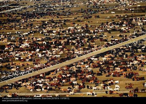 Pitié ! De l'espace pour les vaches | Géographie : les dernières nouvelles de la toile. | Scoop.it