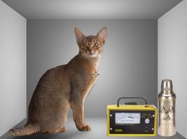 Physicist Solves 'Schrödinger's Cat' Debate - Laboratory Equipment   Heal the world   Scoop.it