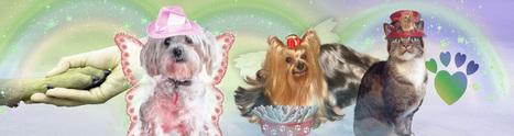 The Rainbow Bridge Show | The Canine Chefs | Scoop.it