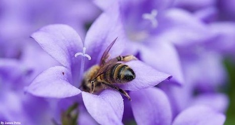 Petition: Walmart Must Stop Poisoning Bees | Our Evolving Earth | Scoop.it
