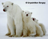 Speak Up & #SaveArcticEnvironment from #Pollution ~  Help by signing & share widely.....thxu | Rescue our Ocean's & it's species from Man's Pollution! | Scoop.it