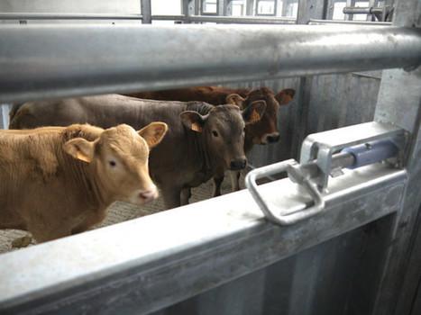 Bazas L'abattoir défend sa position | Agriculture en Gironde | Scoop.it