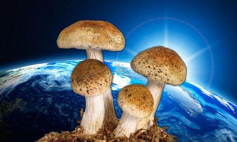 6 vertus extraordinaires que possèdent les champignons et qui pourraient bien sauver notre planète | pour mon jardin | Scoop.it