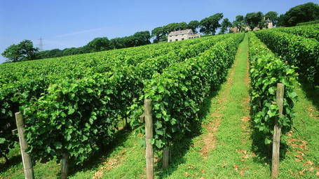 English wines making a splash in the Aussie press | The Authentic Food & Wine Experience | Scoop.it