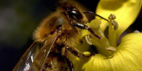 Bataille judiciaire aux Etats-Unis sur les pesticides tueurs d'abeilles | Apiculture et protection de l'environnement | Scoop.it