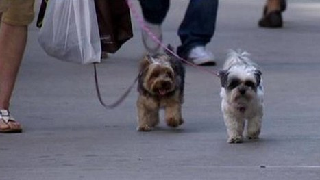 DNA testing on dog waste - myfoxny.com | Shifting Waste | Scoop.it